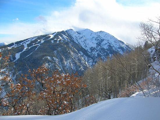 Aspen Background Check